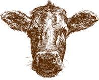 De snuit van de koe Royalty-vrije Stock Afbeelding