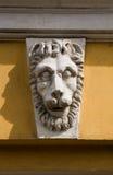 De snuit van de leeuw Royalty-vrije Stock Fotografie