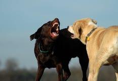 De socialisatie van het puppy Royalty-vrije Stock Fotografie