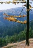 De Sonate van de herfst Stock Foto's