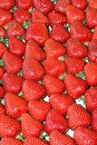 De soort van aardbeien stock foto's