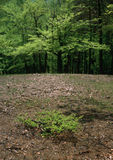 De source toujours durée dans les bois Photo libre de droits