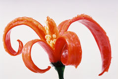 De Spaanse pepers van de decoratie stock fotografie