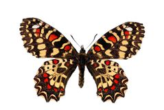 De Spaanse vlinder van de Slinger Royalty-vrije Stock Foto's
