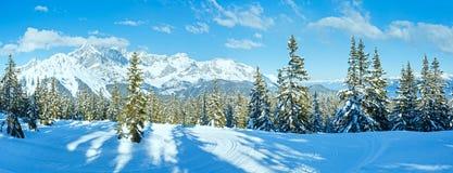 De spar boslandschap van de de winterberg (Oostenrijk)) stock fotografie