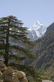 De spar en de berg van Himalayan stock foto