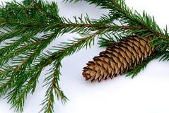De spar van de tak met pinecone Royalty-vrije Stock Fotografie