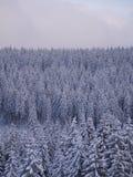 De spar van het de winterlandschap Royalty-vrije Stock Fotografie