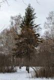 De sparren en de struiken in het bos royalty-vrije stock fotografie