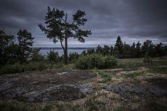 De sparren op de rand van het hout tegen stormachtige hemel overzien meer en de stad in de afstand stock afbeelding