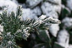 De sparrentakken van de sneeuw onder sneeuwval De winterdetail Stock Afbeeldingen