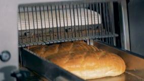 De speciale broden van materiaalbesnoeiingen van brood op een transportband stock videobeelden