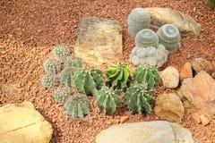 De Species van de cactustuin op toeslag worden geplant die Stock Foto's