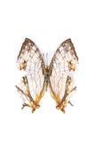 De specimens van de vlinder Stock Foto's