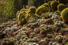 De spectaculaire tuin van de woestijncactus met veelvoudige die types van cactus door de zon worden verlicht stock afbeeldingen