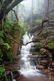 De speelplaats van de aard is de beste Blauwe Bergen Australië stock foto's