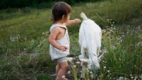 De spelen van de babyjongen met een geit stock footage