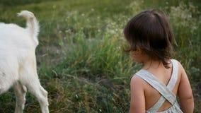 De spelen van de babyjongen met een geit stock video