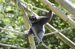 De spelen van de aap met kabels Stock Fotografie