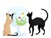 De spelen van de kat met een kleine vis Stock Fotografie