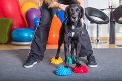 De spelen van het meisje met haar hond Royalty-vrije Stock Foto