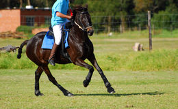 De speler die van Polocrosse op paard berijdt Royalty-vrije Stock Foto