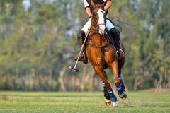 De speler en het paard in het polo stock foto's