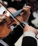 De speler van de viool Stock Fotografie