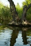 De spiegel van het water royalty-vrije stock foto's