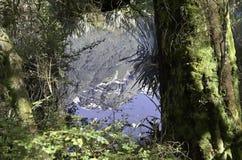 De Spiegelmeren in het Nationale Park van Fiordland Mooi Nieuw Zeeland Stock Foto's