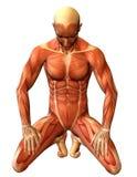 De spiermens van de studie op zijn knieën Stock Afbeeldingen