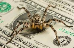 De spin die van het vergift geld beschermt Royalty-vrije Stock Afbeeldingen