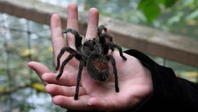 de spin dient dierentuin in stock video