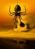 De spin en de schedel van de zwarte weduwe stock afbeeldingen