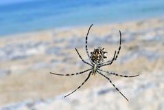 De spin en het overzees Stock Afbeeldingen
