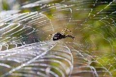 De spin en het waterdruppeltjes van het Web. Royalty-vrije Stock Fotografie