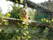 De spin heeft ontbijt op het Web Royalty-vrije Stock Fotografie