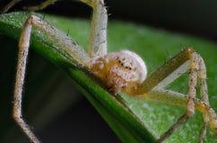 De spin in het gras Stock Foto's