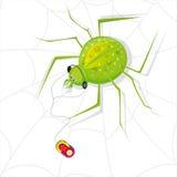 De spin luistert muziek Stock Afbeelding
