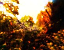 De spin ontspant Stock Afbeeldingen
