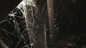 De spin op een spinneweb tijdens nacht stock footage