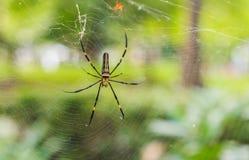 De spin op spiderwebs die op slachtoffers met selectieve focu wachten Stock Foto