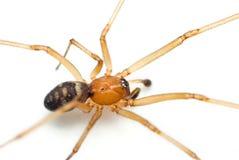 De spin van de kast Royalty-vrije Stock Afbeeldingen