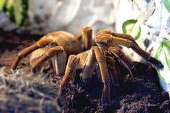 De spin van de vogel Stock Afbeelding
