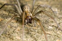 De spin van de wolf die op hout wordt neergestreken stock afbeelding