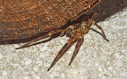 De spin van de wolf onder een logboek Stock Foto