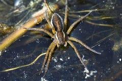 De spin van het water. Stock Afbeeldingen
