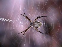 De spin van het Web Stock Foto