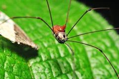 De spin van hooiwagens Stock Afbeelding