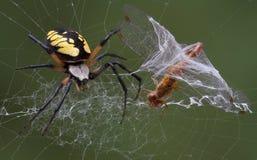 De spin vangt libel Royalty-vrije Stock Fotografie